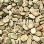 Broad Beans | Beans Suppliers | Persian Wholesaler