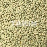 Green Lentils | Beans Suppliers